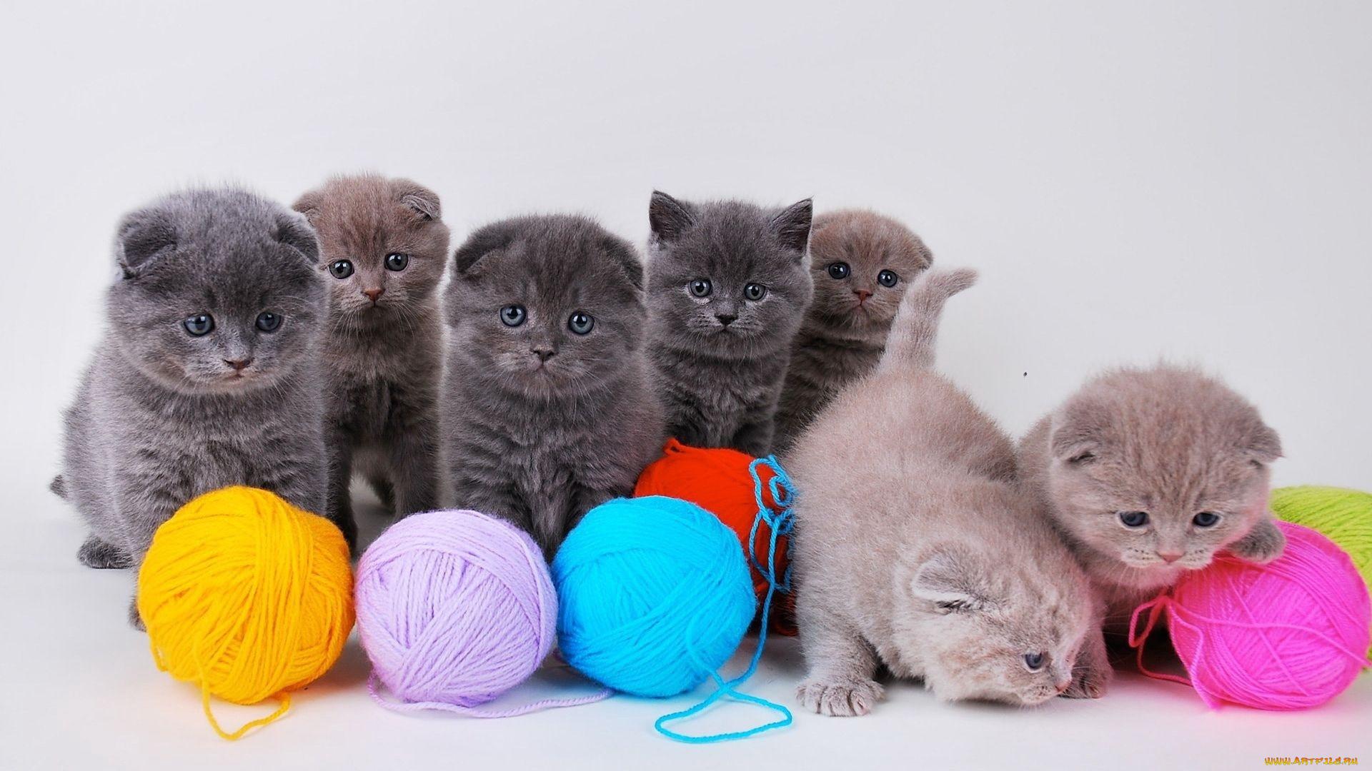 картинки клубочки для котенка выполняется высококачественной бумаге